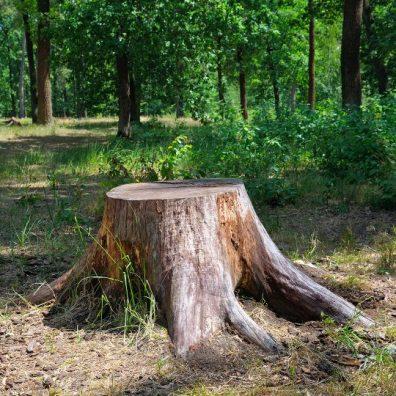 stump-grinding-540x540